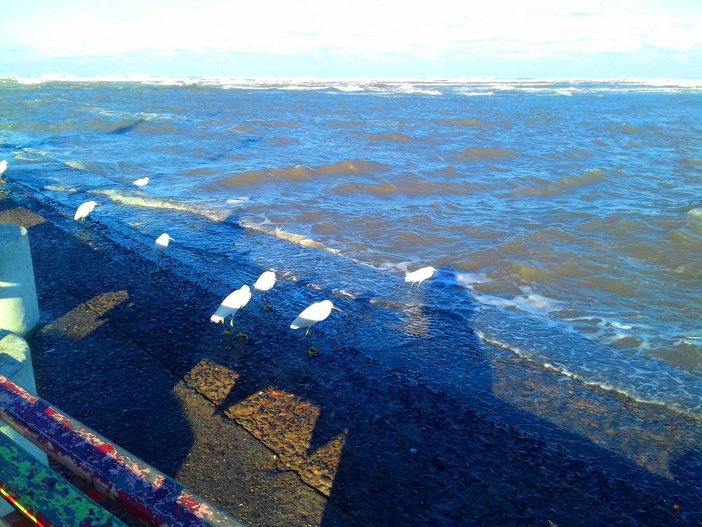 Foto do dia: Mar agitado e frio