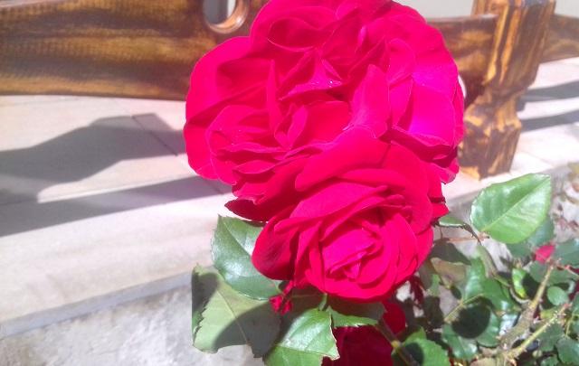 flor-rosa-vermelha