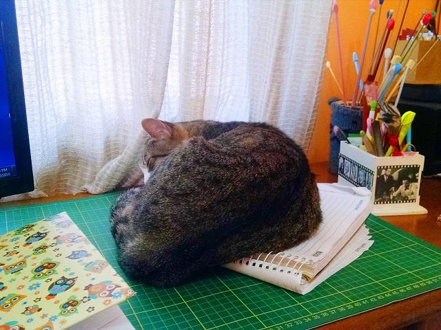 gatinha-dormindo