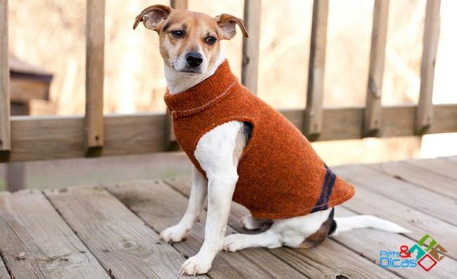 Achados: Roupinha de cachorro com manga de blusão – Links legais da semana