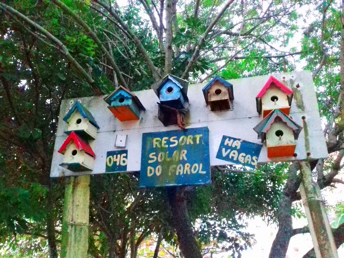 Foto do dia : Casinha de passarinho