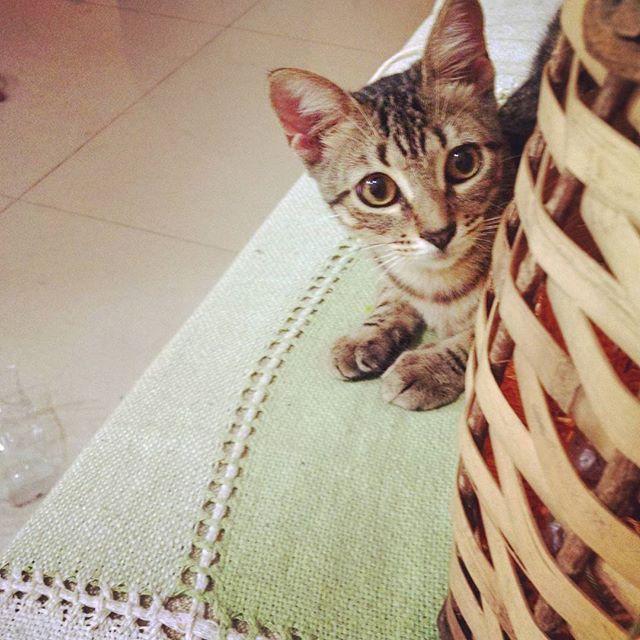 Domingo /  Instagram / chuva / gatos