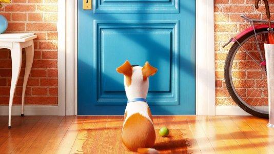 Sessão Cinema: A vida Secreta dos Animais